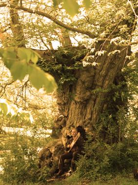 Mont Dol Jaufré lyre arbre